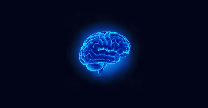 Harikalar Harikası Bir Organ: Beyin